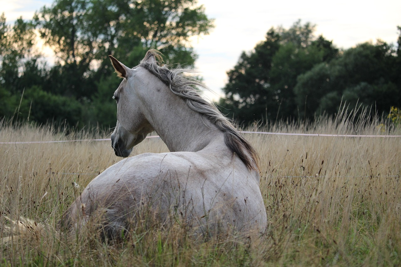 Przewożenie koni